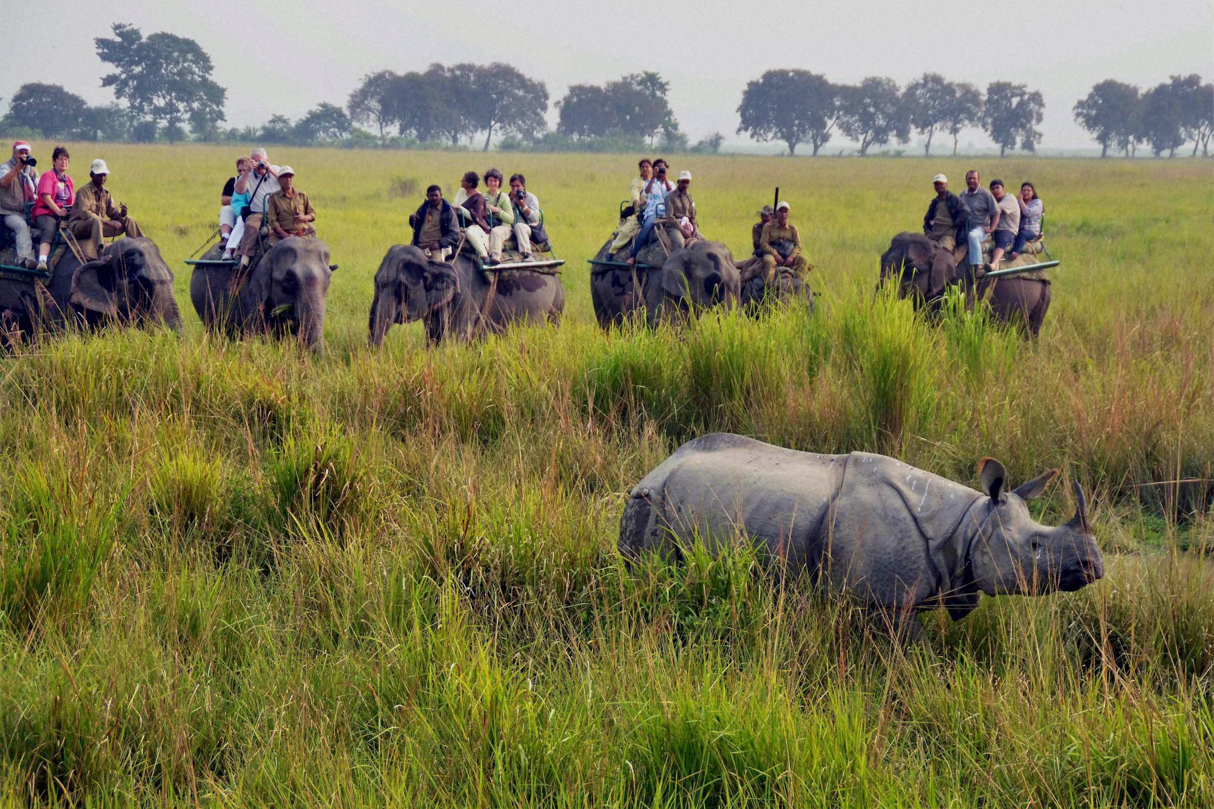 Wildlife Safari in Kaziranga National Park