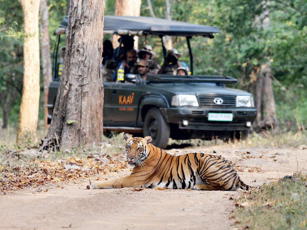 Summer wildlife safari in India