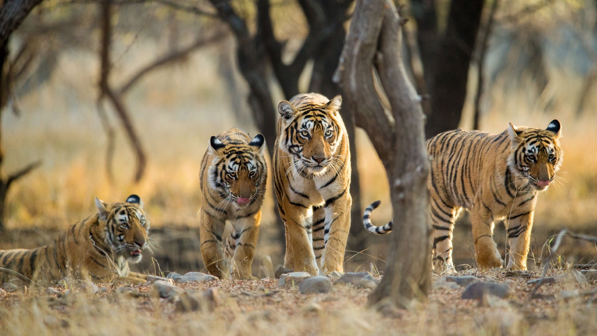 Tips to Experience India's Rich Wildlife